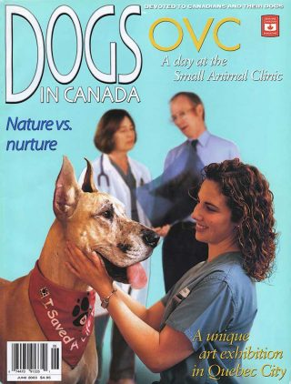 Commercial photography of a dog at the Ontario Veterinarian College.
