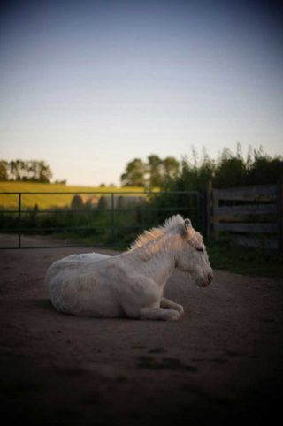 Artistic animal photography of a white donkey taken at The Donkey Sanctuary of Canada in Ontario.
