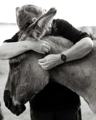 Animal picture of a volunteer with a donkey at a sanctuary.